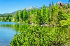 Bello lago della montagna con il pino mugo Immagini Stock Libere da Diritti