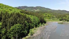 Bello lago e foresta verde fresca, video aereo archivi video