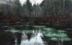 Bello lago in Estonia fotografia stock libera da diritti