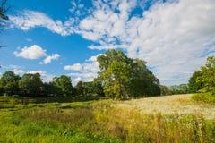 Bello lago tranquillo con gli alberi sull'orizzonte e sulle nuvole gonfie bianche nel cielo Giorno di estate pacifico al cottage  fotografia stock
