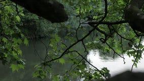 Bello lago in una foresta con i rami d'oscillazione stock footage
