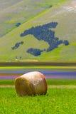 Bello landscaape di agricoltura in Italia Fotografie Stock