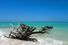 Bello legname galleggiante stagionato Fotografia Stock Libera da Diritti