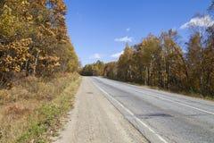 Bello legno di autunno immagini stock