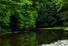 Bello legno di estate Fotografia Stock