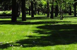 Bello legno verde Fotografie Stock