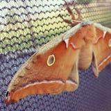 Bello lepidottero Fotografie Stock Libere da Diritti