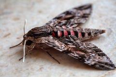 Bello lepidottero Fotografia Stock