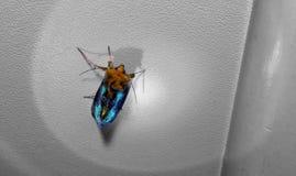 Bello lepidottero Fotografia Stock Libera da Diritti