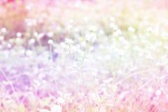 Bello luminoso dell'erba del fiore fatto con il filtro colorato Fotografie Stock Libere da Diritti