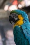 Bello macaw Fotografie Stock Libere da Diritti