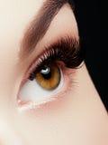 Bello macro colpo dell'occhio femminile con i cigli lunghi estremi ed il trucco nero della fodera immagini stock libere da diritti