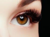Bello macro colpo dell'occhio femminile con i cigli lunghi estremi ed il trucco nero della fodera immagini stock