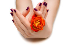 Bello manicure Fotografia Stock
