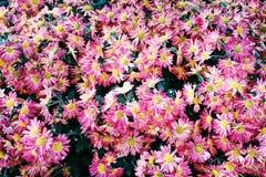 Bello mazzo dei fiori Fotografie Stock