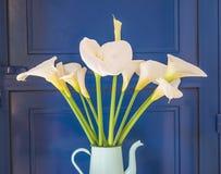Bello mazzo dei fiori bianchi di aro della calla nella caffettiera d'annata contro la porta blu immagini stock