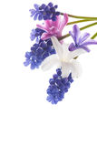 Bello mazzo dei fiori della sorgente Immagine Stock