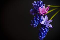 Bello mazzo dei fiori della sorgente Fotografia Stock Libera da Diritti
