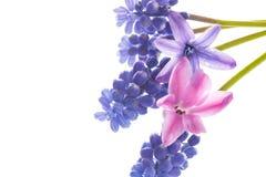 Bello mazzo dei fiori della sorgente Fotografia Stock