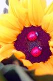 Bello mazzo dei fiori di estate fotografie stock libere da diritti