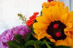 Bello mazzo dei fiori di estate immagine stock libera da diritti