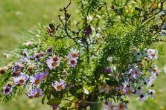 Bello mazzo dei fiori selvaggi su fondo verde fotografia stock libera da diritti