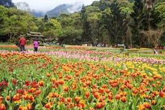 Bello mazzo dei tulipani Fotografia Stock Libera da Diritti
