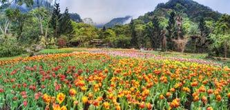 Bello mazzo dei tulipani Fotografia Stock