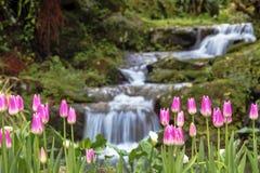 Bello mazzo dei tulipani Immagine Stock Libera da Diritti