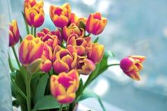 Bello mazzo dei tulipani Fotografie Stock Libere da Diritti