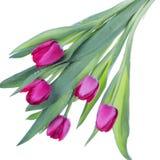 Bello mazzo dei tulipani dentellare Fotografie Stock