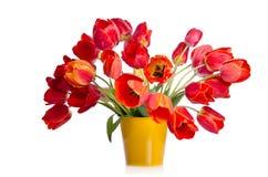 Bello mazzo dei tulipani variopinti in vaso giallo Fotografia Stock Libera da Diritti
