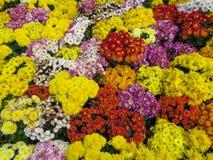 Bello mazzo dei wildflowers luminosi Immagini Stock