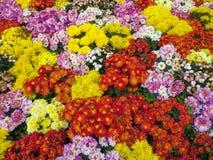 Bello mazzo dei wildflowers luminosi Immagine Stock Libera da Diritti