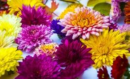 Bello mazzo del primo piano dei crisantemi Immagine Stock Libera da Diritti
