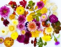 Bello mazzo del primo piano dei crisantemi Immagine Stock