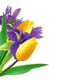 Bello mazzo della molla dei tulipani e delle iridi isolati su bianco Immagine Stock Libera da Diritti