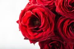 Bello mazzo delle rose rosse, dell'amore e del concetto romanzesco fotografie stock libere da diritti