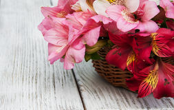 Bello mazzo di alstroemeria rosa Fotografie Stock Libere da Diritti
