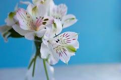 Bello mazzo tenero del primo piano di Alstroemeria su backgr blu Fotografie Stock Libere da Diritti