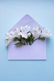 Bello mazzo tenero di Alstroemeria in busta sul BAC blu Fotografie Stock