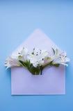 Bello mazzo tenero di Alstroemeria in busta sul BAC blu Fotografia Stock Libera da Diritti
