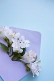 Bello mazzo tenero di Alstroemeria in busta sul BAC blu Fotografia Stock