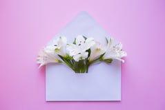 Bello mazzo tenero di Alstroemeria in busta sul BAC rosa Immagine Stock Libera da Diritti
