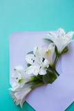 Bello mazzo tenero di Alstroemeria in busta sul gre della menta Fotografie Stock