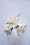 Bello mazzo tenero di Alstroemeria sul backgro di marmo bianco Fotografia Stock Libera da Diritti