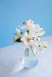 Bello mazzo tenero di Alstroemeria in vaso di vetro sulla b blu Immagini Stock