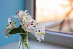 Bello mazzo tenero di Alstroemeria vicino alla finestra soleggiata Fotografia Stock Libera da Diritti