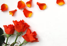 Bello modello delle rose per le presentazioni Vista superiore del posto di lavoro da tavolino Fotografie Stock