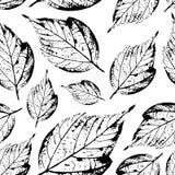 Bello modello senza cuciture dei bolli delle foglie dagli alberi e dalla Florida Fotografia Stock Libera da Diritti